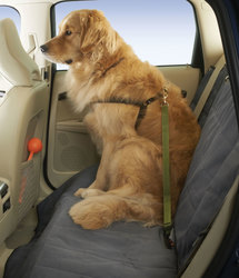 High Road Wag'nRide Seat Belt Tether For Dogs: Black